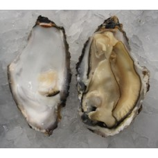 Live USA Oyster